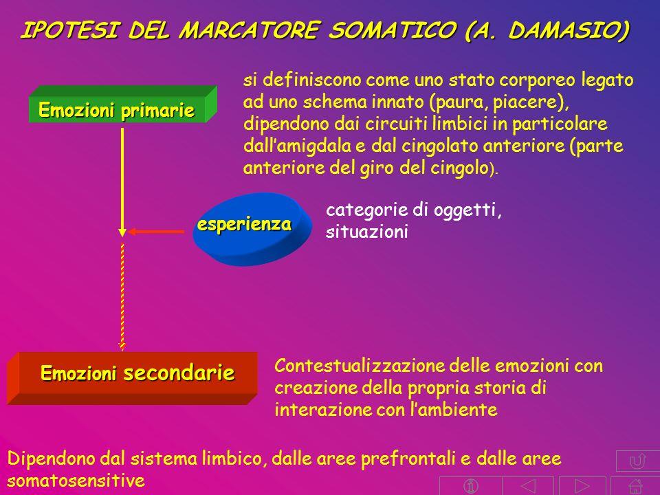 Emozioni primarie si definiscono come uno stato corporeo legato ad uno schema innato (paura, piacere), dipendono dai circuiti limbici in particolare dallamigdala e dal cingolato anteriore (parte anteriore del giro del cingolo ).