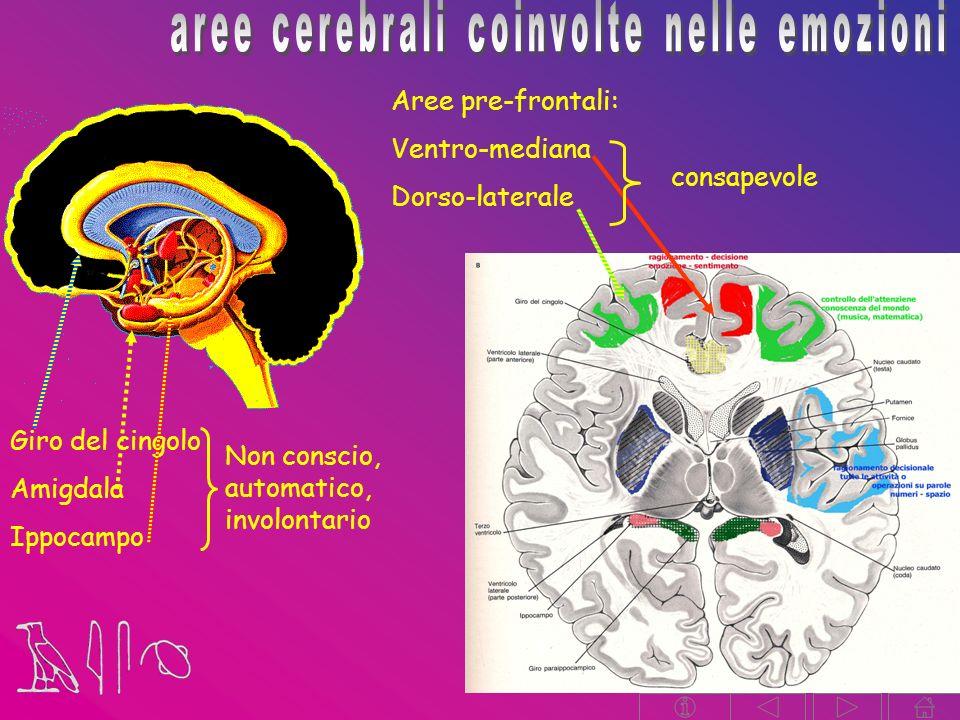 Aree pre-frontali: Ventro-mediana Dorso-laterale Giro del cingolo Amigdala Ippocampo Non conscio, automatico, involontario consapevole