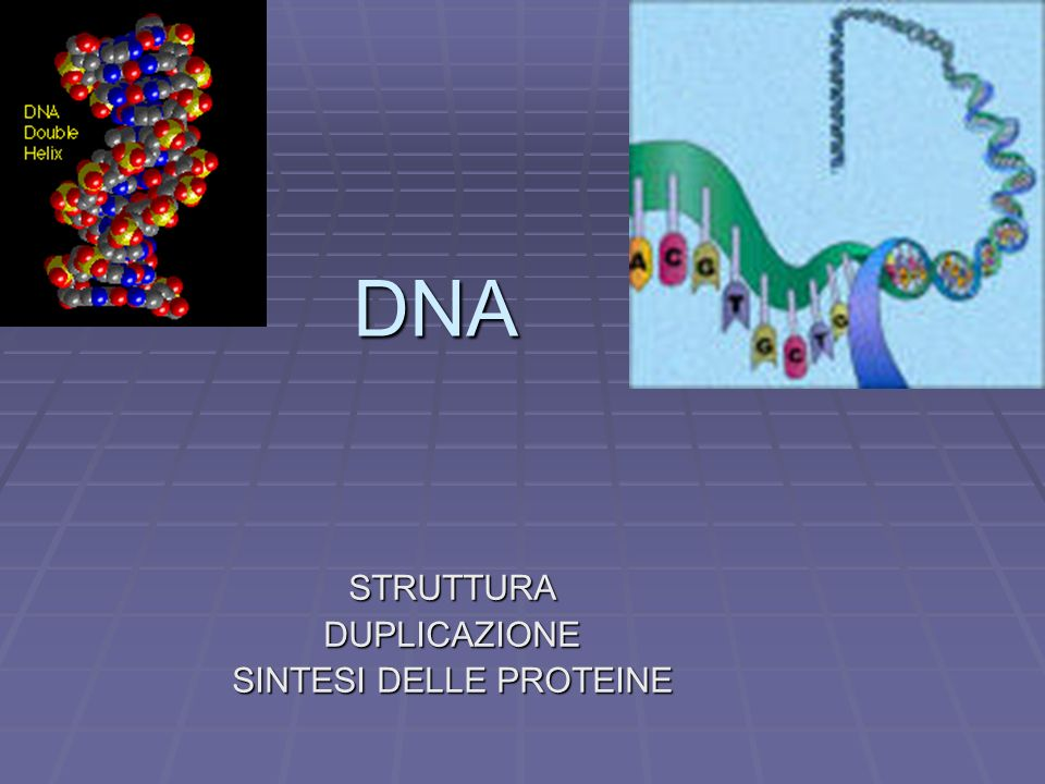 DNA STRUTTURADUPLICAZIONE SINTESI DELLE PROTEINE