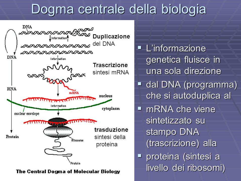 Dogma centrale della biologia Linformazione genetica fluisce in una sola direzione Linformazione genetica fluisce in una sola direzione dal DNA (progr