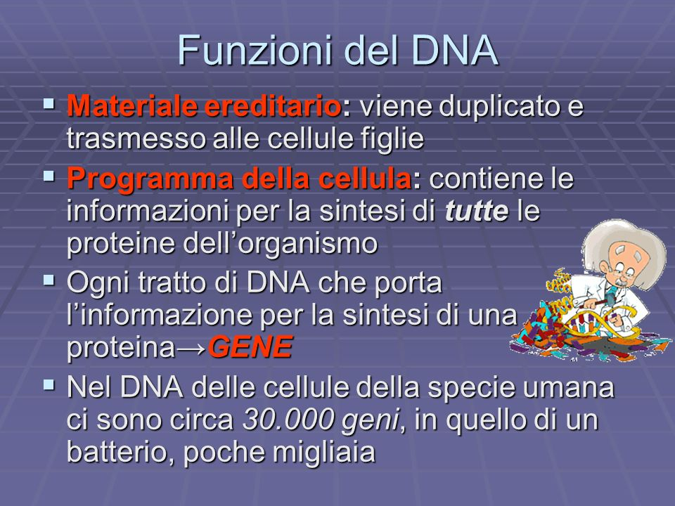 Funzioni del DNA Materiale ereditario: viene duplicato e trasmesso alle cellule figlie Materiale ereditario: viene duplicato e trasmesso alle cellule