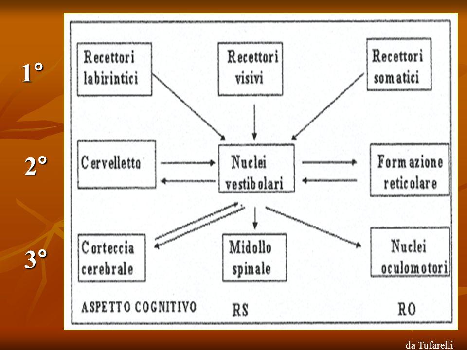 Semplificazione del sistema dellequilibrio Il sistema visivo è direttamente controllato dal cervello: il sistema oculomotore mantiene stabile la fissazione sugli oggetti in relazione alla stazionarietà del capo.