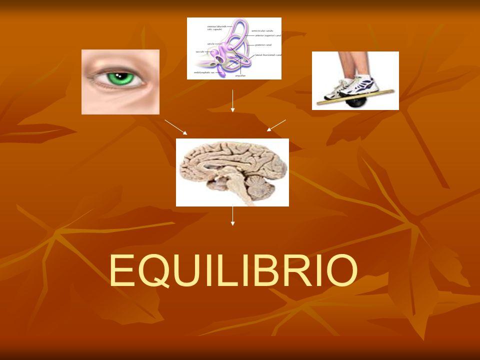Riflessi oculomotori - - riflesso vestibulo-oculomotore (da stimolo labirintico); - riflessi visivi otticocinetico, di inseguimento lento e di raggiungimento rapido della mira visiva (da stimolo visivo dato dallo scivolamento retinale e cioè dallo spostamento della mira stessa); - riflesso cervico-oculomotore (da stimolo dei propriocettori dei muscoli e dei tendini della colonna cervicale).