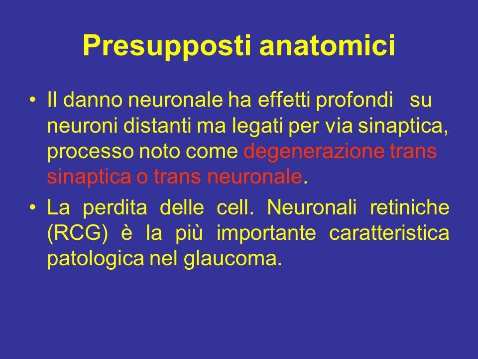 Presupposti anatomici Il danno neuronale ha effetti profondi su neuroni distanti ma legati per via sinaptica, processo noto come degenerazione trans s