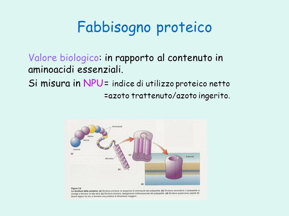 Fabbisogno proteico Valore biologico: in rapporto al contenuto in aminoacidi essenziali. Si misura in NPU= indice di utilizzo proteico netto =azoto tr