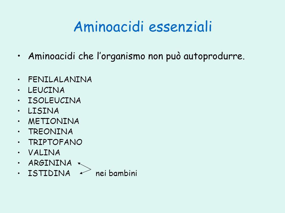 Aminoacidi essenziali Aminoacidi che lorganismo non può autoprodurre. FENILALANINA LEUCINA ISOLEUCINA LISINA METIONINA TREONINA TRIPTOFANO VALINA ARGI