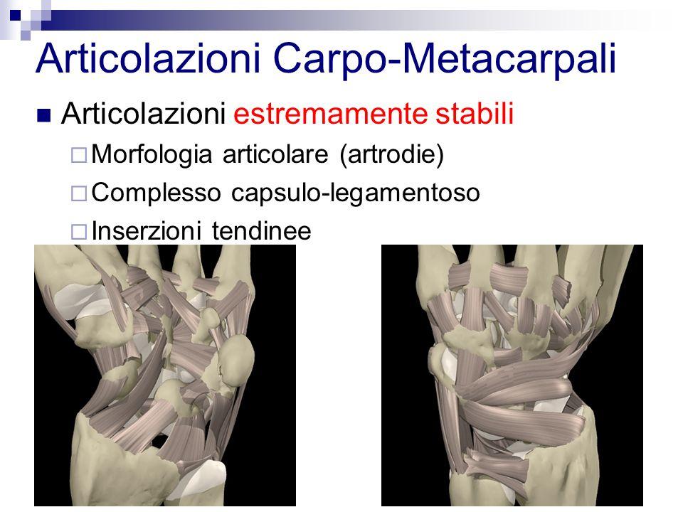 Articolazioni Carpo-Metacarpali Articolazioni estremamente stabili Morfologia articolare (artrodie) Complesso capsulo-legamentoso Inserzioni tendinee