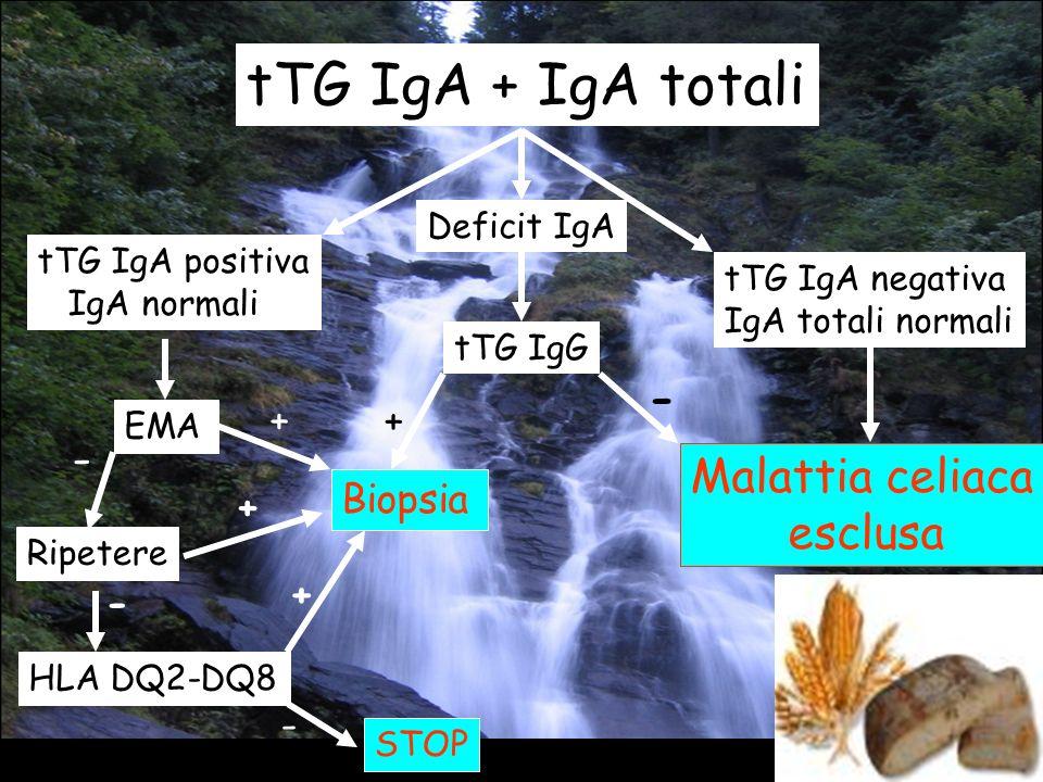 30 tTG IgA + IgA totali tTG IgA negativa IgA totali normali Malattia celiaca esclusa tTG IgA positiva IgA normali EMA + Biopsia - Ripetere - HLA DQ2-D