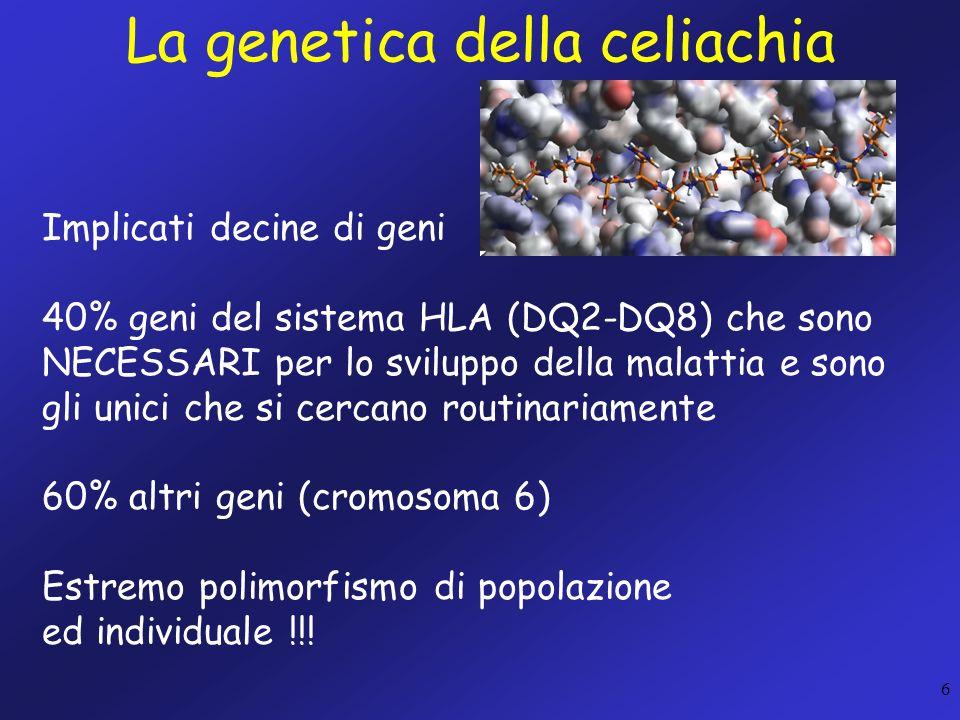 6 La genetica della celiachia Implicati decine di geni 40% geni del sistema HLA (DQ2-DQ8) che sono NECESSARI per lo sviluppo della malattia e sono gli