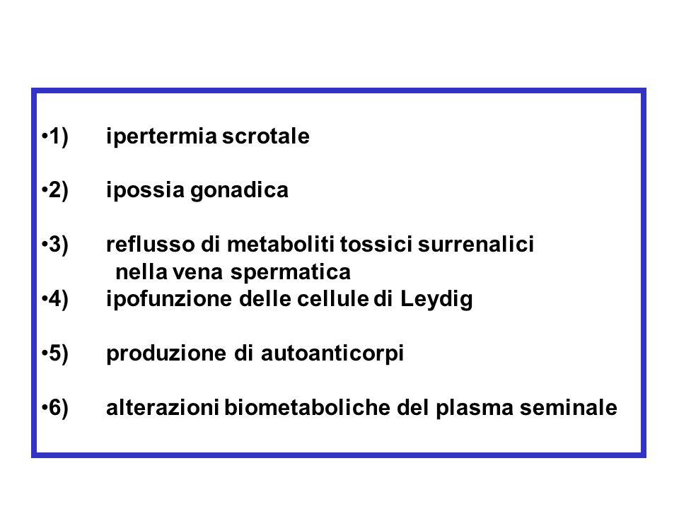 FISIOPATOLOGIA DEL VARICOCELE complessità anatomica di drenaggio venoso del testicolo Tipi di REFLUSSO: Reno-spermatico (90%) Iliaco-spermatico Reno-i