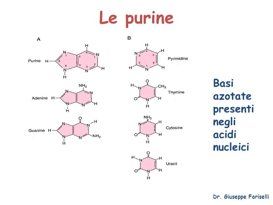 Le purine Dr. Giuseppe Fariselli Basi azotate presenti negli acidi nucleici