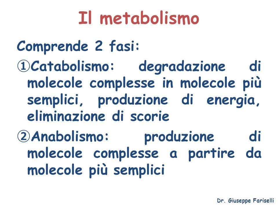 Il metabolismo Comprende 2 fasi: Catabolismo: degradazione di molecole complesse in molecole più semplici, produzione di energia, eliminazione di scor