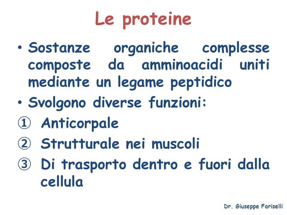 Le proteine Sostanze organiche complesse composte da amminoacidi uniti mediante un legame peptidico Svolgono diverse funzioni: Anticorpale Strutturale