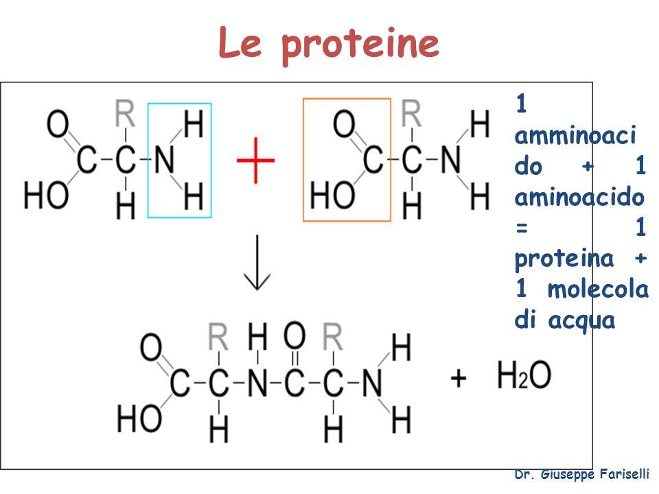Le proteine Dr. Giuseppe Fariselli 1 amminoaci do + 1 aminoacido = 1 proteina + 1 molecola di acqua