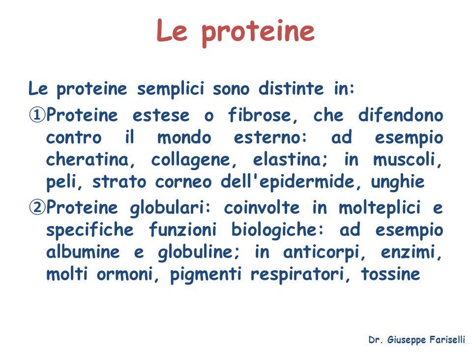 Le proteine Le proteine semplici sono distinte in: Proteine estese o fibrose, che difendono contro il mondo esterno: ad esempio cheratina, collagene,