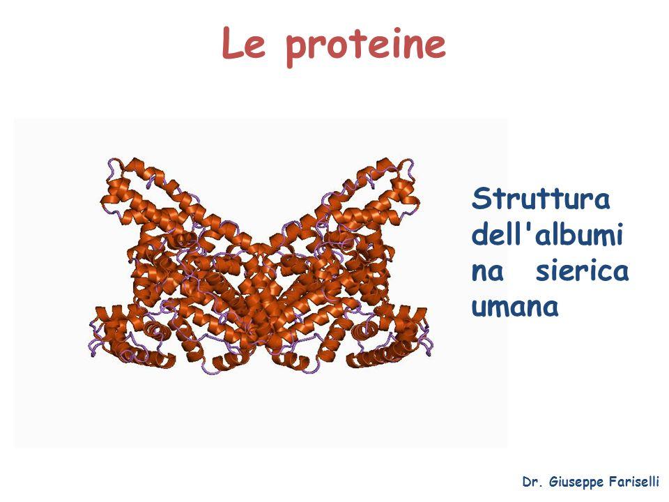Le proteine Dr. Giuseppe Fariselli Struttura dell'albumi na sierica umana