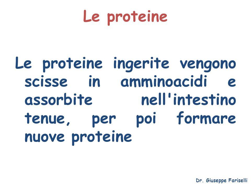 Le proteine Le proteine ingerite vengono scisse in amminoacidi e assorbite nell'intestino tenue, per poi formare nuove proteine Dr. Giuseppe Fariselli