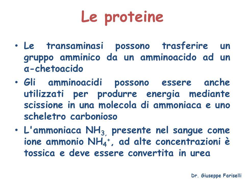 Le proteine Le transaminasi possono trasferire un gruppo amminico da un amminoacido ad un α-chetoacido Gli amminoacidi possono essere anche utilizzati