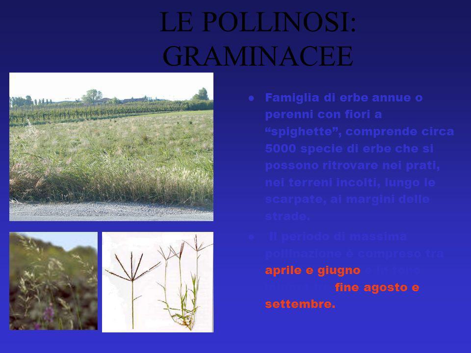 Famiglia di erbe annue o perenni con fiori a spighette, comprende circa 5000 specie di erbe che si possono ritrovare nei prati, nei terreni incolti, lungo le scarpate, ai margini delle strade.