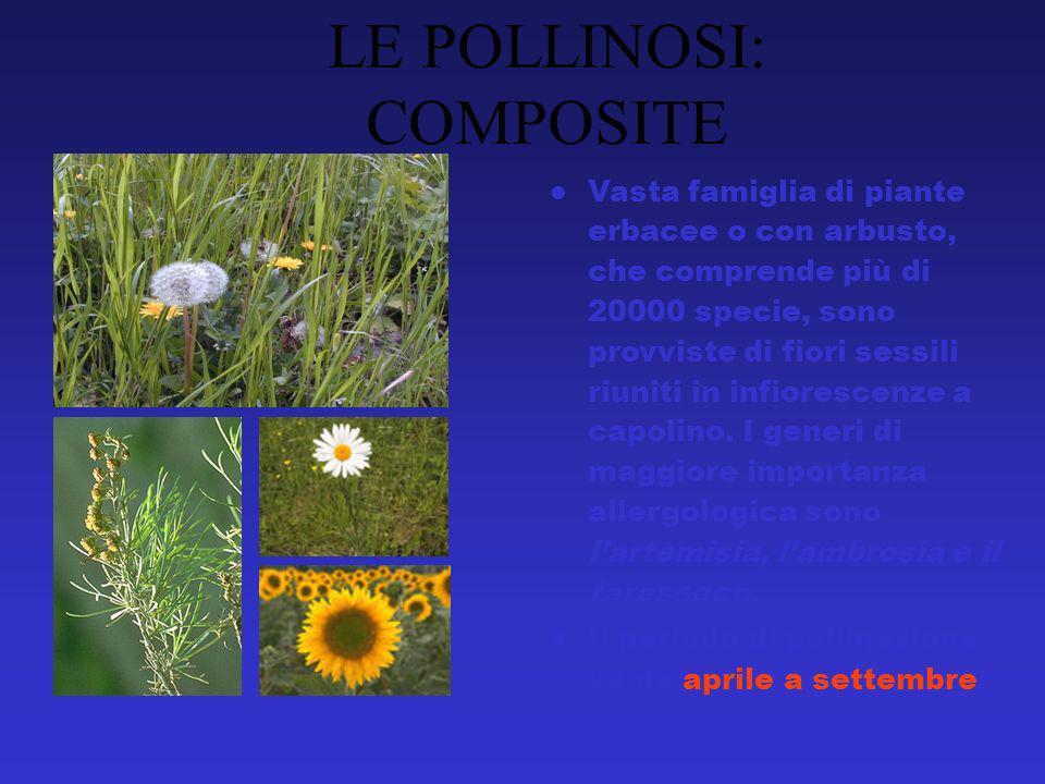 Vasta famiglia di piante erbacee o con arbusto, che comprende più di 20000 specie, sono provviste di fiori sessili riuniti in infiorescenze a capolino.