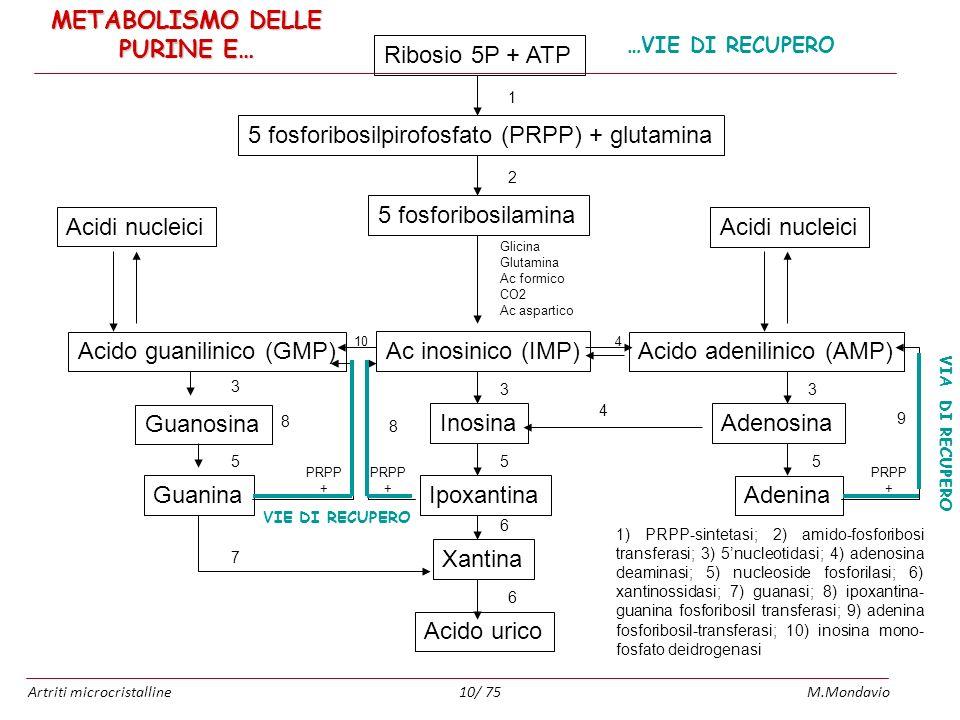 Artriti microcristallineM.Mondavio10/ 75 Ribosio 5P + ATP 5 fosforibosilpirofosfato (PRPP) + glutamina 5 fosforibosilamina Ac inosinico (IMP) 1 2 Glic
