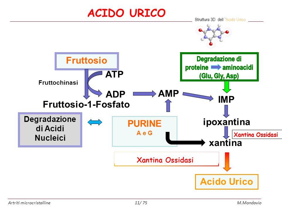 Artriti microcristallineM.Mondavio11/ 75 ipoxantina Fruttochinasi xantina Fruttosio ATP ADP Fruttosio-1-Fosfato AMP IMP Acido Urico PURINE A e G Degra
