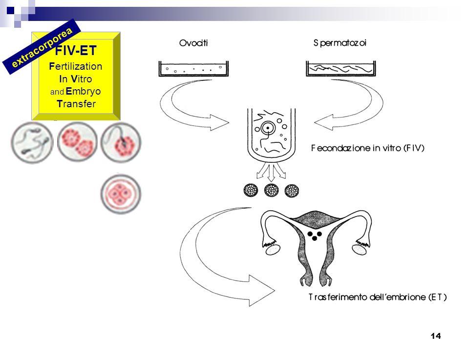 14 FIV-ET Fertilization In Vitro and Embryo Transfer extracorporea