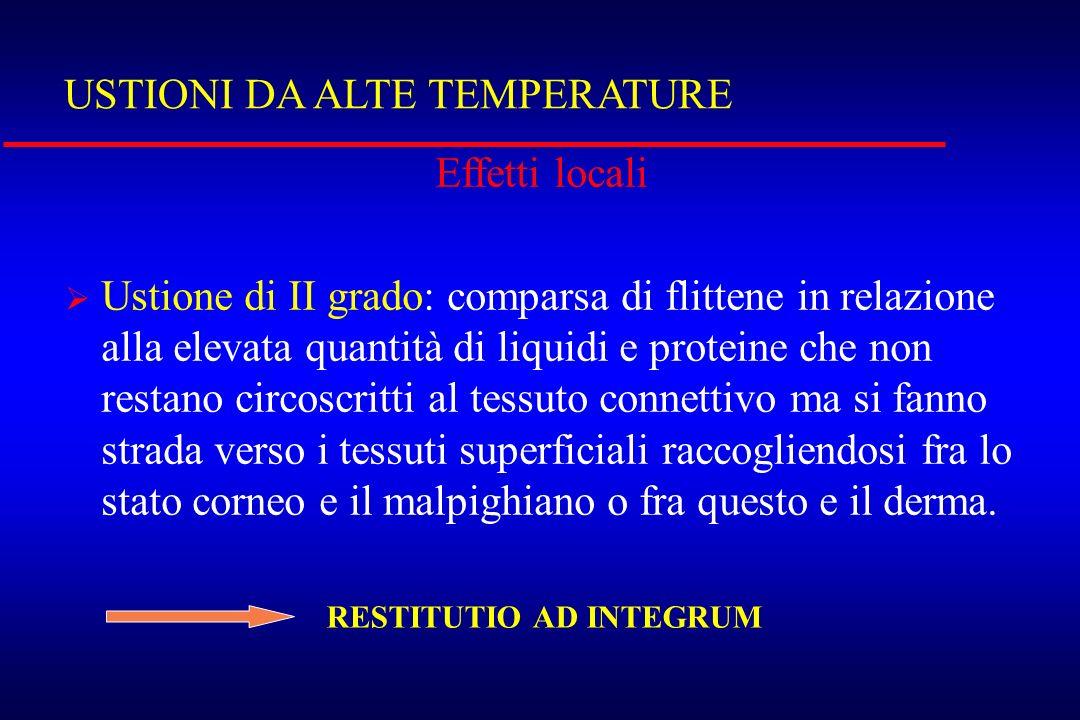 USTIONI DA ALTE TEMPERATURE Effetti locali Ustione di II grado: comparsa di flittene in relazione alla elevata quantità di liquidi e proteine che non