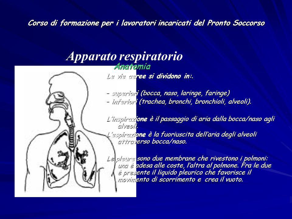 Corso di formazione per i lavoratori incaricati del Pronto Soccorso Anatomia Anatomia Le vie aeree si dividono in:. – superiori (bocca, naso, laringe,