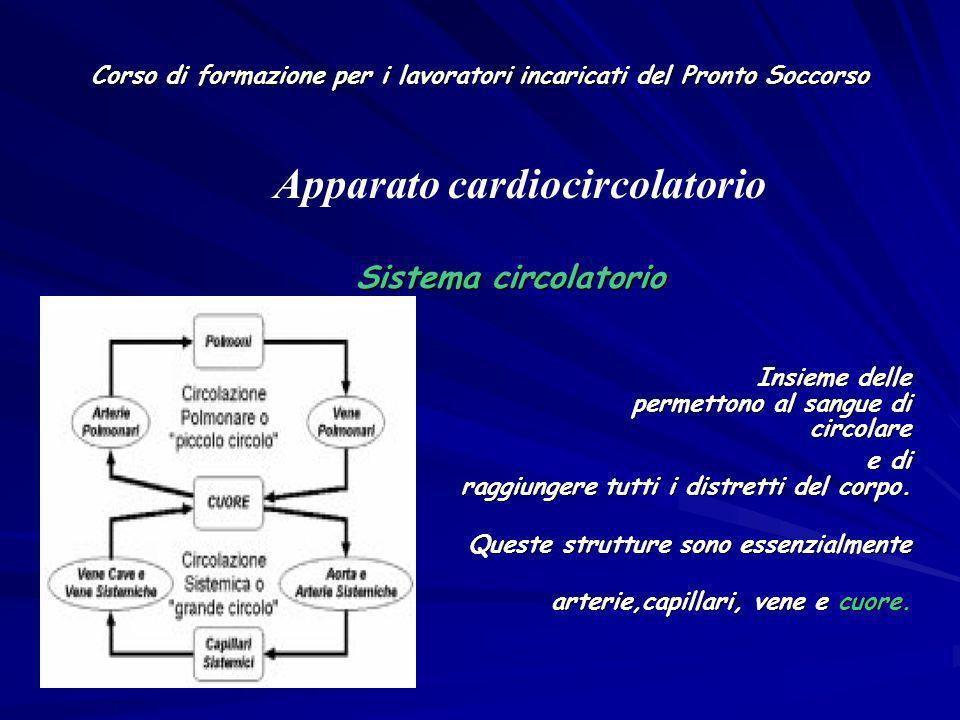 Corso di formazione per i lavoratori incaricati del Pronto Soccorso Sistema circolatorio Sistema circolatorio Insieme delle strutture che permettono a