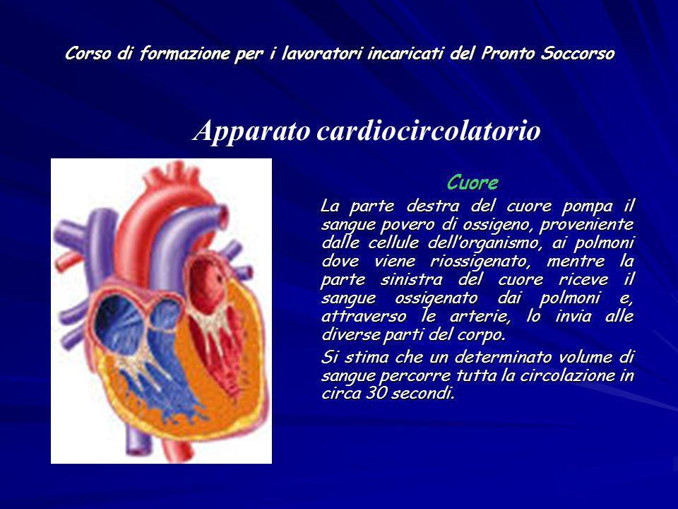 Corso di formazione per i lavoratori incaricati del Pronto Soccorso Cuore Cuore La parte destra del cuore pompa il sangue povero di ossigeno, provenie