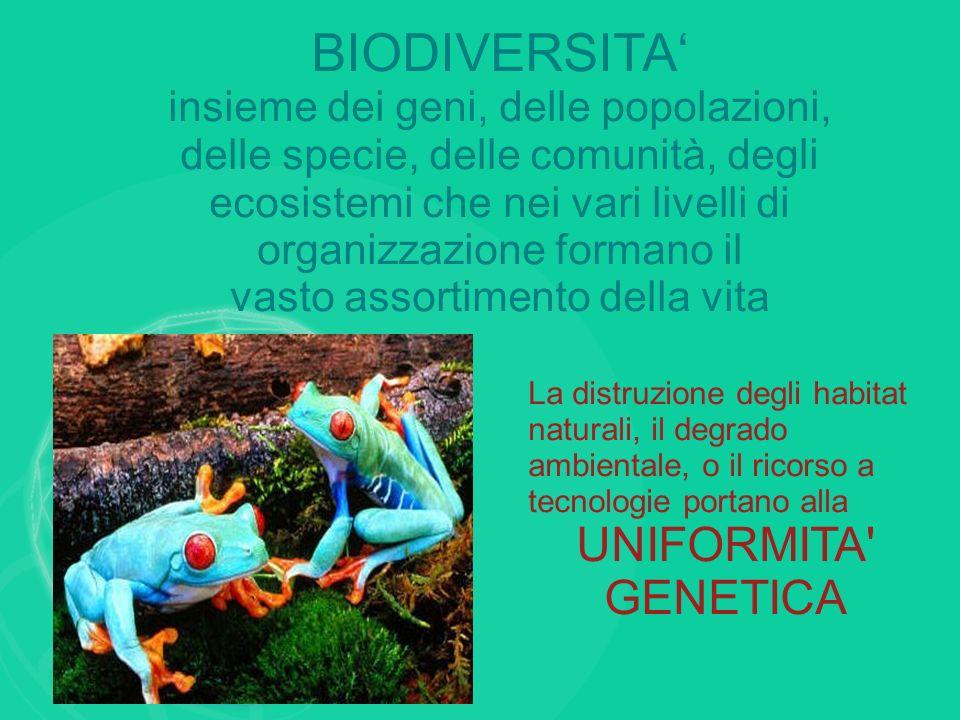BIODIVERSITA insieme dei geni, delle popolazioni, delle specie, delle comunità, degli ecosistemi che nei vari livelli di organizzazione formano il vas