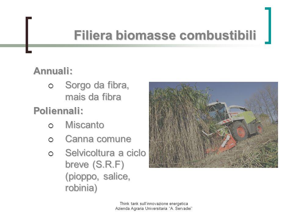 Think tank sull'innovazione energetica Azienda Agraria Universitaria A. Servadei Filiera biomasse combustibili Annuali: Sorgo da fibra, mais da fibra