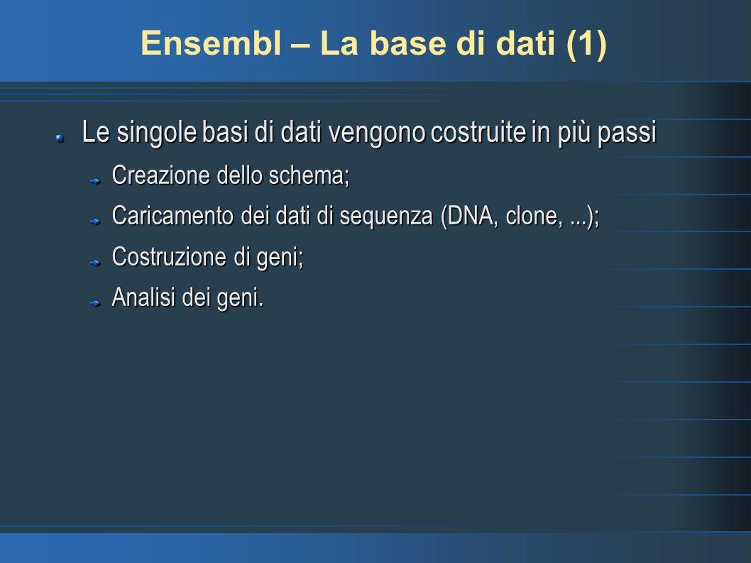 Ensembl – La base di dati (1) Le singole basi di dati vengono costruite in più passi Creazione dello schema; Caricamento dei dati di sequenza (DNA, cl