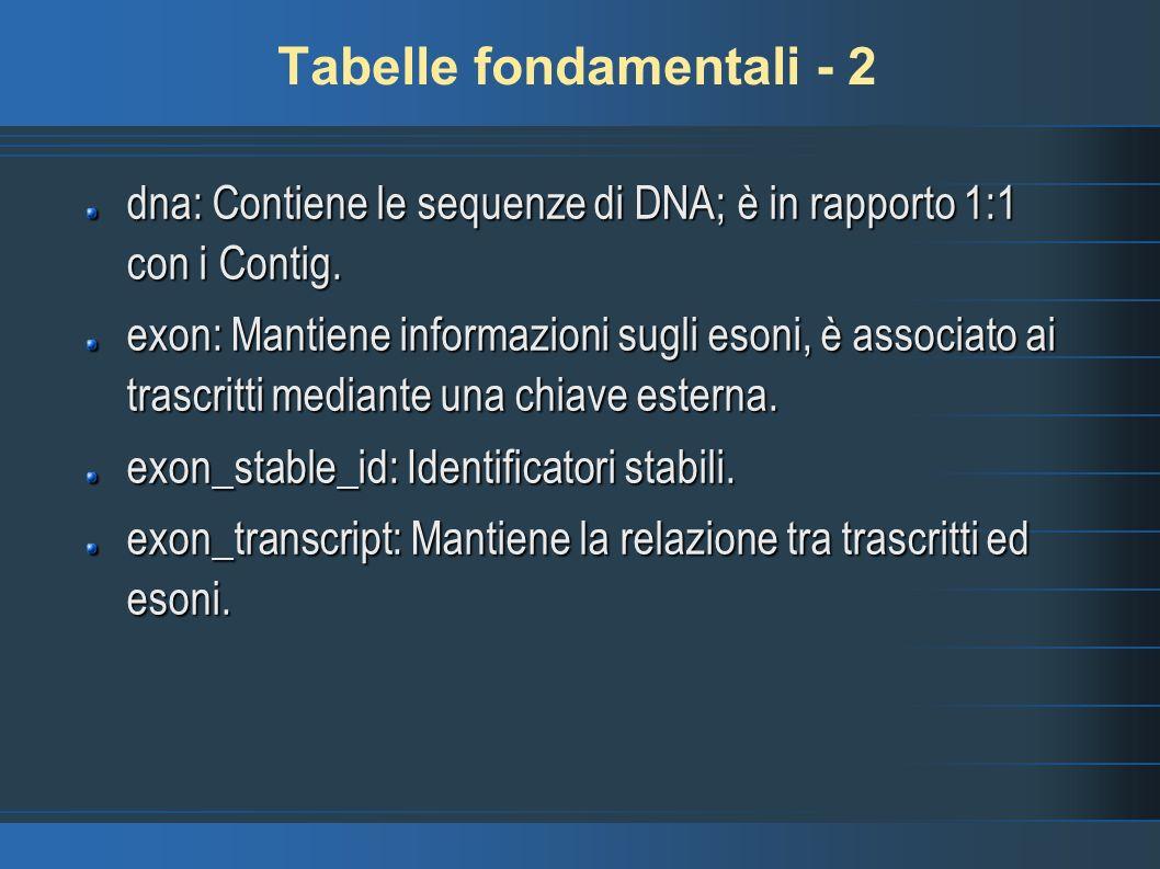 Tabelle fondamentali - 2 dna: Contiene le sequenze di DNA; è in rapporto 1:1 con i Contig. exon: Mantiene informazioni sugli esoni, è associato ai tra
