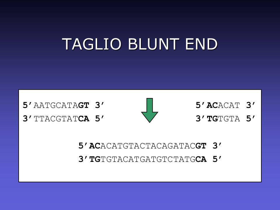 TAGLIO BLUNT END 5AATGCATAGT 3 5ACACAT 3 3TTACGTATCA 5 3TGTGTA 5 5ACACATGTACTACAGATACGT 3 3TGTGTACATGATGTCTATGCA 5