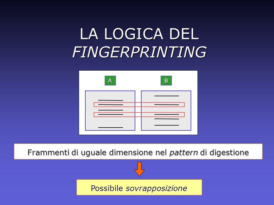 LA LOGICA DEL FINGERPRINTING Frammenti di uguale dimensione nel pattern di digestione Possibile sovrapposizione BA