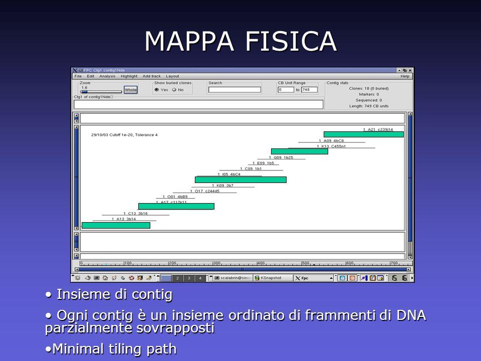 MAPPA FISICA Insieme di contig Insieme di contig Ogni contig è un insieme ordinato di frammenti di DNA parzialmente sovrapposti Ogni contig è un insie
