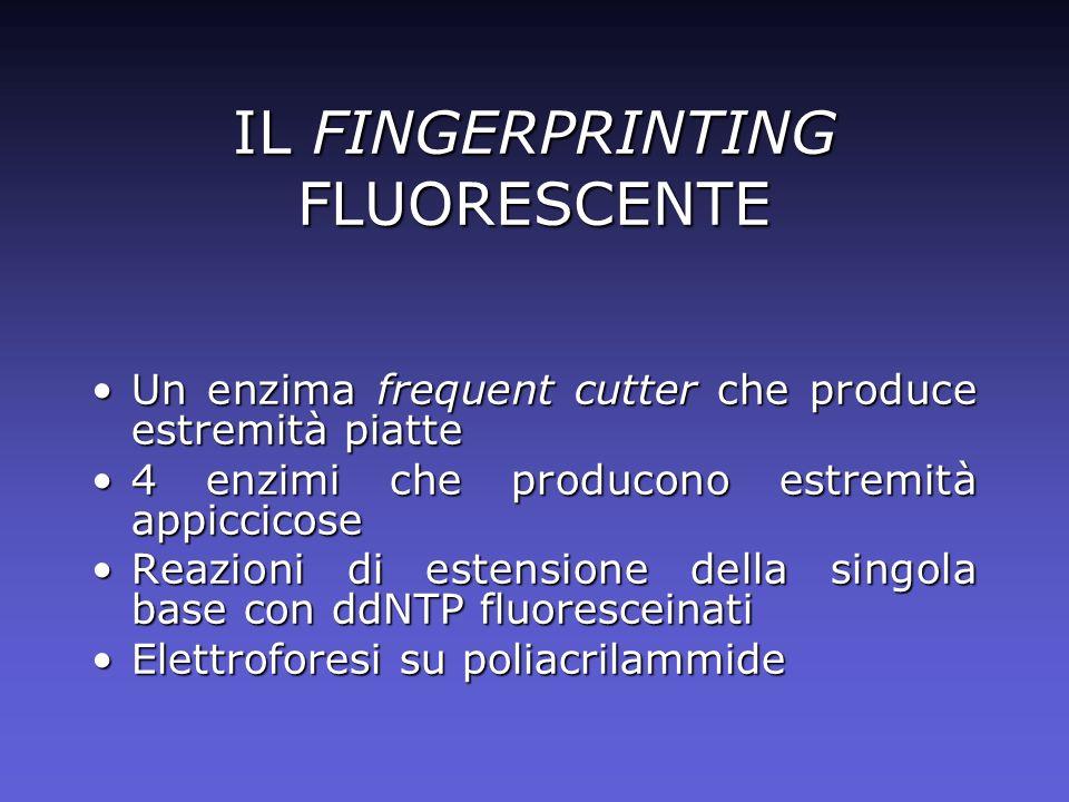 IL FINGERPRINTING FLUORESCENTE Un enzima frequent cutter che produce estremità piatteUn enzima frequent cutter che produce estremità piatte 4 enzimi c