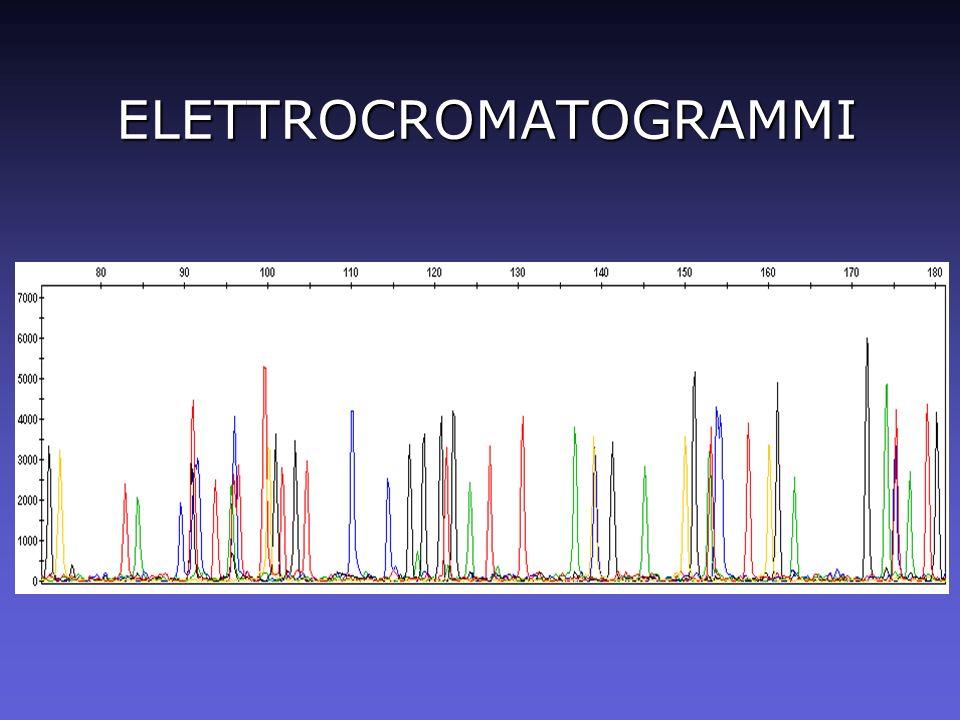 INDIVIDUAZIONE DEI PICCHI Tabella in formato testo (GeneMapper)