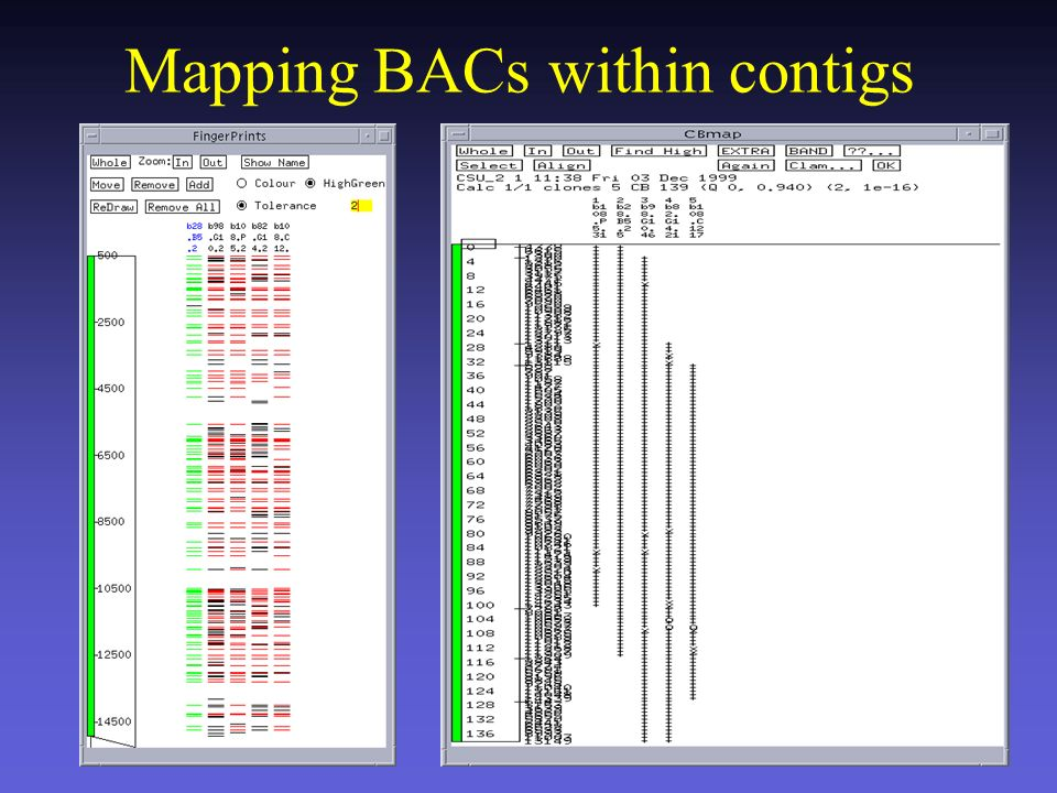 CB Maps FPC prova a ordinare cloni basandosi su Consensus Bands Extra bands Clone name Bands + = shared band o = missing band x = 2 tolerance bin Clone order