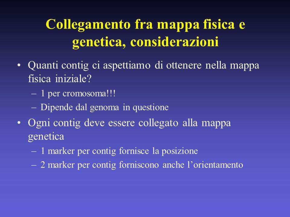Collegamento fra mappa fisica e genetica, considerazioni Quanti contig ci aspettiamo di ottenere nella mappa fisica iniziale? –1 per cromosoma!!! –Dip