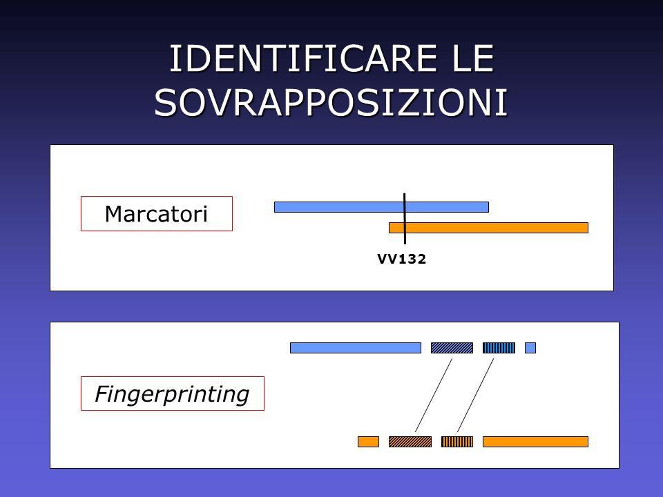 IDENTIFICARE LE SOVRAPPOSIZIONI Marcatori VV132 Fingerprinting