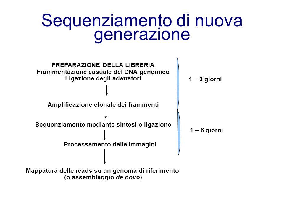 PREPARAZIONE DELLA LIBRERIA Frammentazione casuale del DNA genomico Ligazione degli adattatori Amplificazione clonale dei frammenti Sequenziamento mediante sintesi o ligazione Processamento delle immagini Mappatura delle reads su un genoma di riferimento (o assemblaggio de novo) 1 – 3 giorni 1 – 6 giorni Sequenziamento di nuova generazione