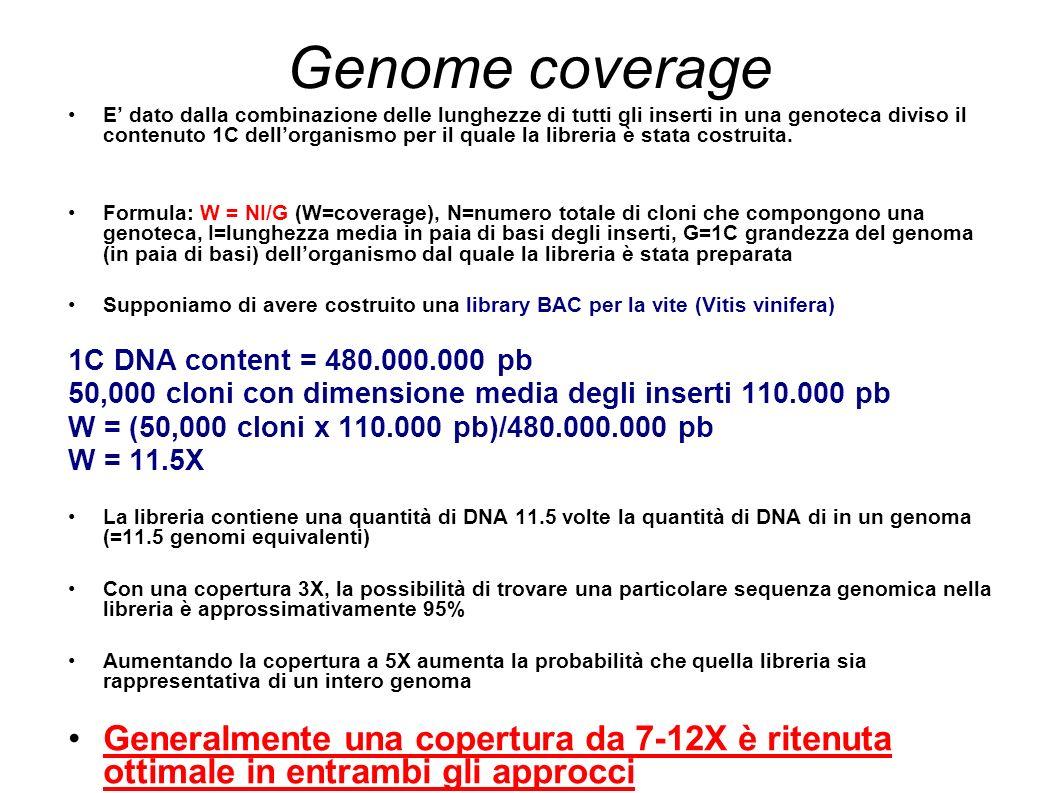 Genome coverage E dato dalla combinazione delle lunghezze di tutti gli inserti in una genoteca diviso il contenuto 1C dellorganismo per il quale la libreria è stata costruita.