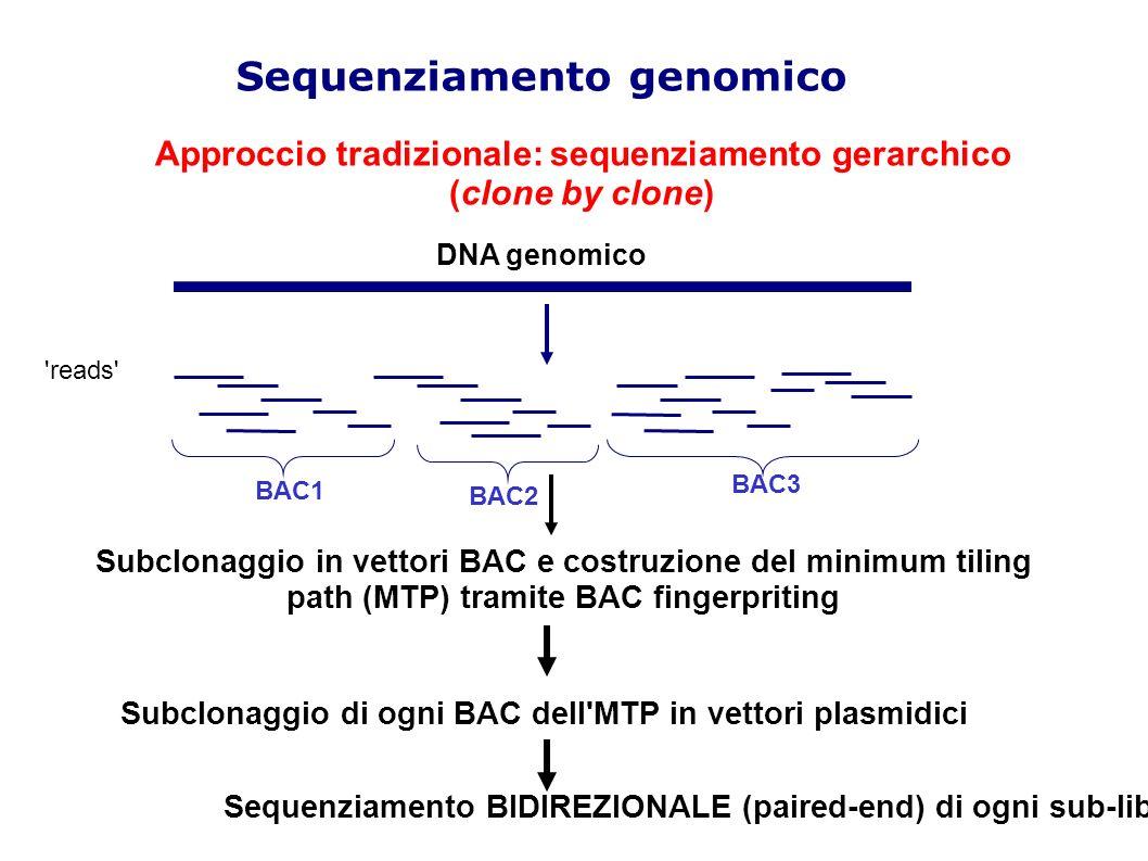 DNA Genomico Approccio tradizionale: sequenziamento gerarchico (clone by clone) Sequenziamento genomico DNA genomico Subclonaggio in vettori BAC e costruzione del minimum tiling path (MTP) tramite BAC fingerpriting Subclonaggio di ogni BAC dell MTP in vettori plasmidici Sequenziamento BIDIREZIONALE (paired-end) di ogni sub-libreria reads BAC1 BAC2 BAC3