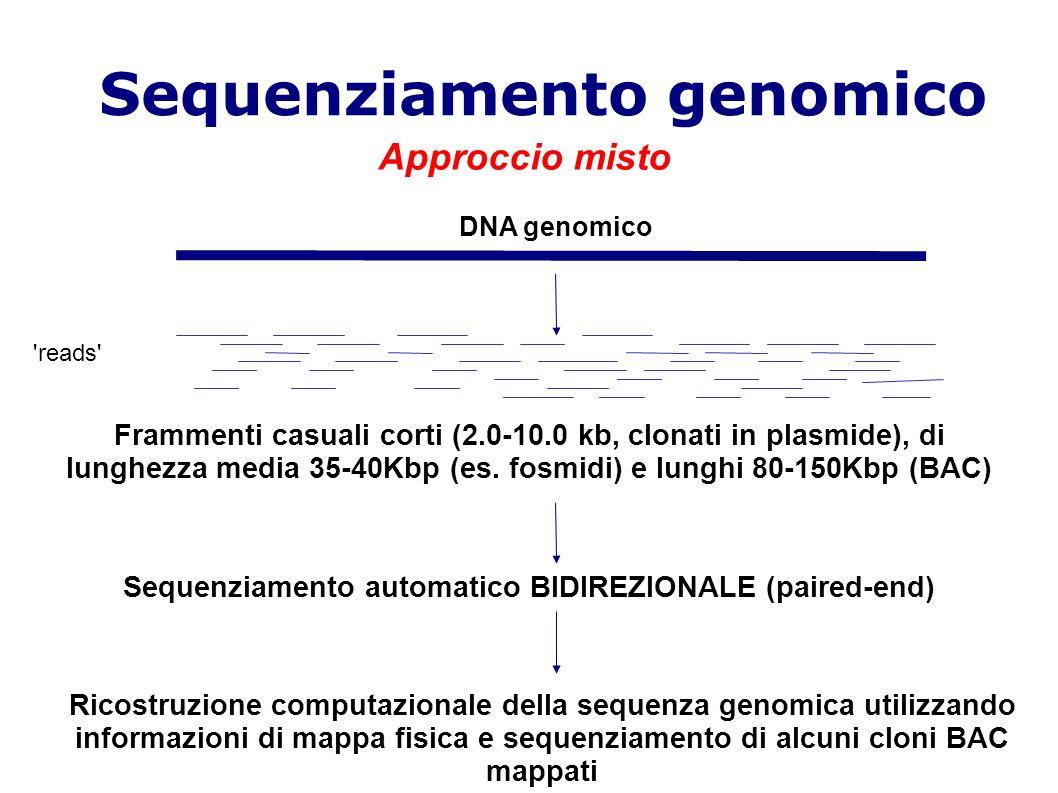 Sequenziamento genomico Frammenti casuali corti (2.0-10.0 kb, clonati in plasmide), di lunghezza media 35-40Kbp (es.