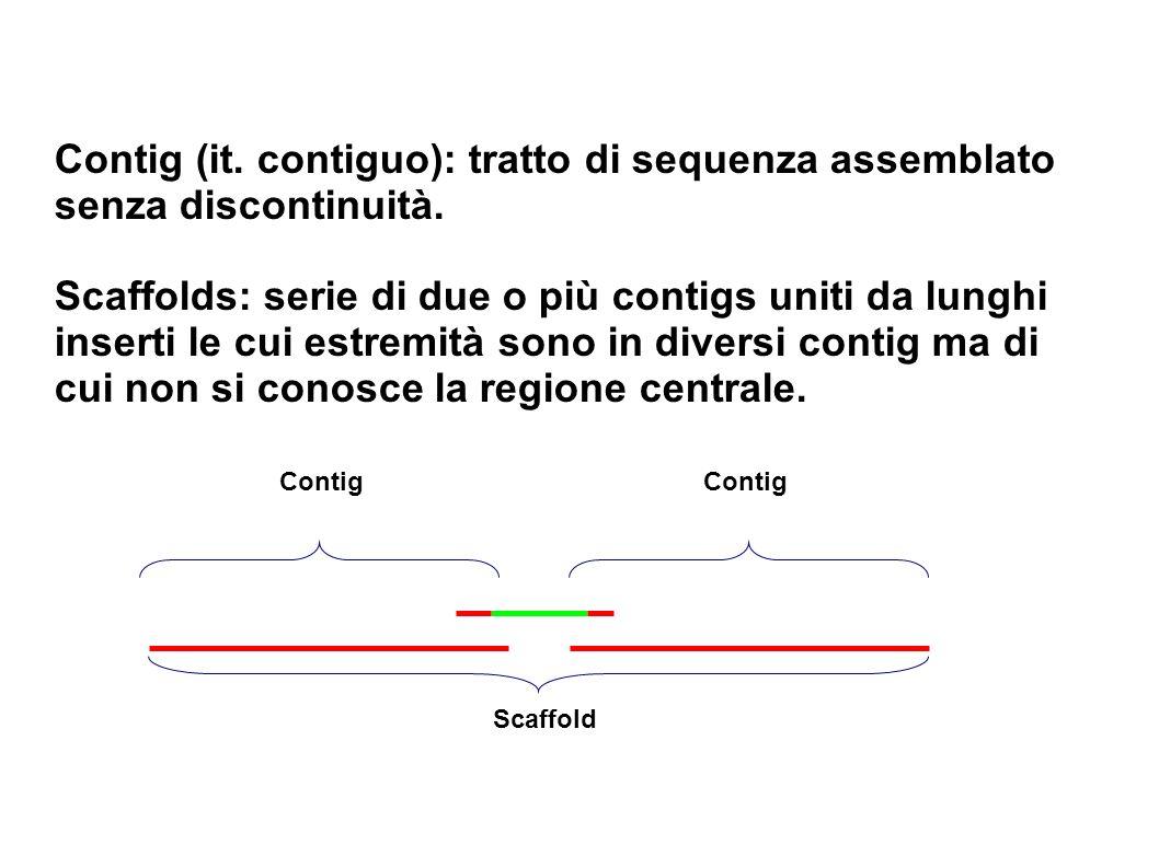 Contig (it. contiguo): tratto di sequenza assemblato senza discontinuità.