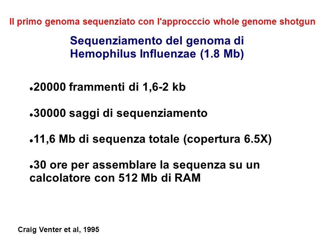 20000 frammenti di 1,6-2 kb 30000 saggi di sequenziamento 11,6 Mb di sequenza totale (copertura 6.5X) 30 ore per assemblare la sequenza su un calcolatore con 512 Mb di RAM Sequenziamento del genoma di Hemophilus Influenzae (1.8 Mb) Il primo genoma sequenziato con l approcccio whole genome shotgun Craig Venter et al, 1995