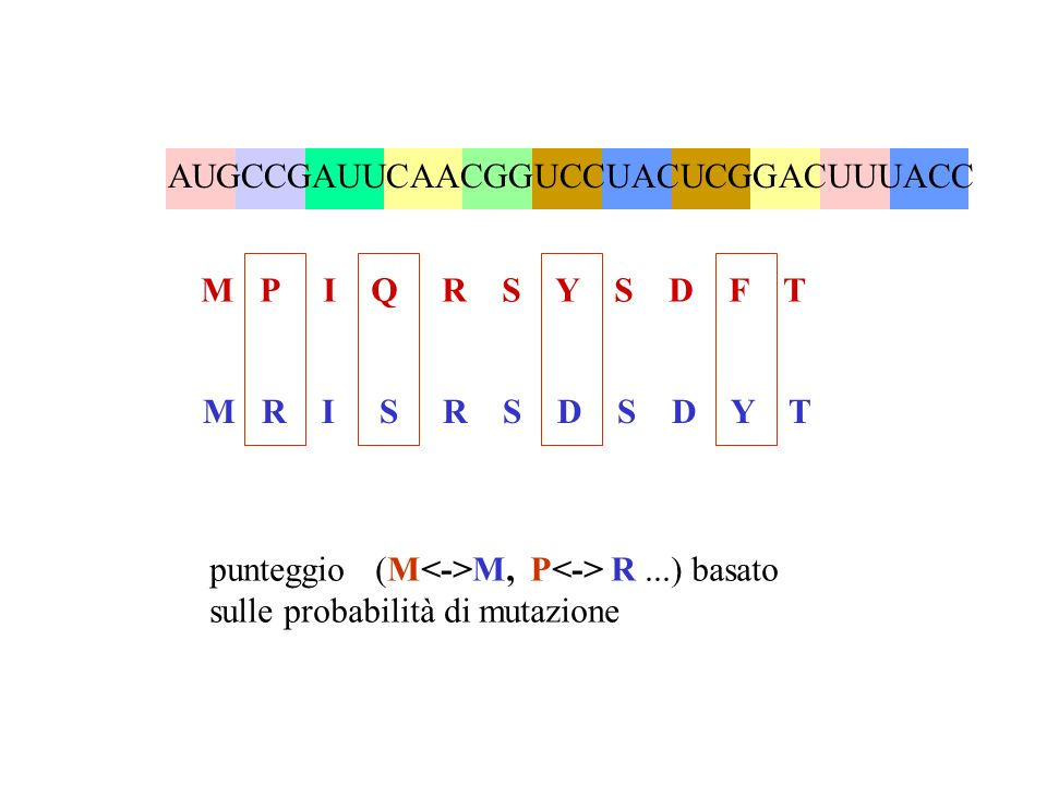 AUGCCGAUUCAACGGUCCUACUCGGACUUUACC M P I Q R S Y S D F T M R I S R S D S D Y T punteggio (M M, P R...) basato sulle probabilità di mutazione